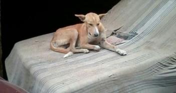 سكان شارع «جمال عبدالناصر» بجسر السويس يشكون انتشار الكلاب الضالة (صورة)