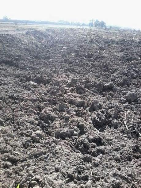 بالصور.. تعديات على نهر النيل بمحافظة كفر الشيخ في غياب مسئولي وزارة الري