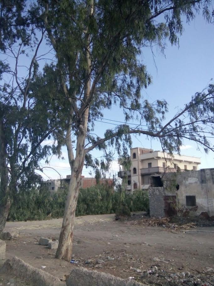 بالصور.. تركيب عشوائي لأعمدة الكهرباء على الطريق الزراعي بين كفر والدوار والإسكندرية