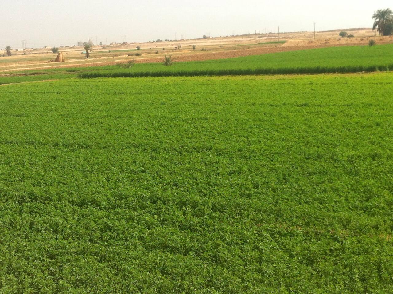 وبعد الأرض ما طرحت خير.. الحكومة تقرر تحويل أراضي زراعية مُستصلحة في قنا إلى «مقابر»