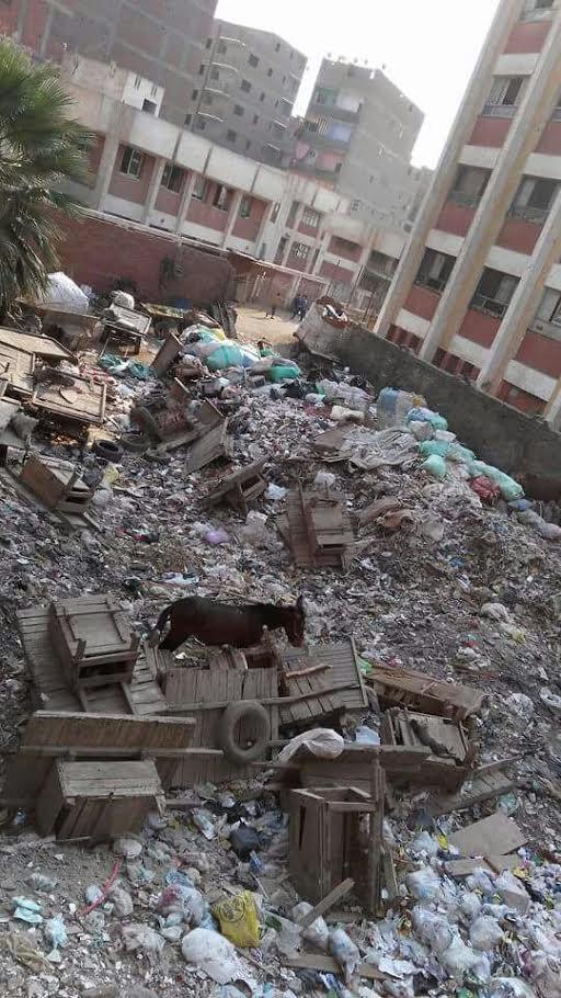استياء بين أولياء أمور «مدرسة صفية زغلول» بالهرم بسبب انتشار القمامة (صورة)