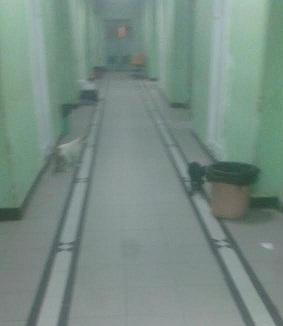 بالصور.. مواطن يرصد قططًا تتجول في مستشفى قصر العيني بشبين الكوم