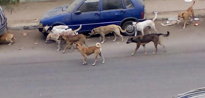 سكان «الحي السابع» بمدينة نصر يشكون من انتشار الكلاب بالشوارع (صور)