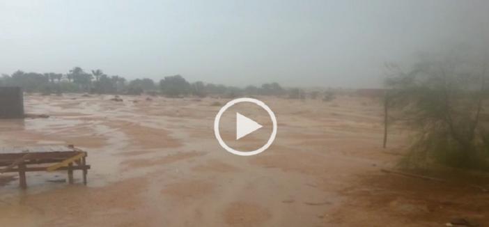 ☔️بالفيديو.. أمطار غزيرة على بيوت في العراء بطور سيناء