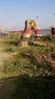 سوهاج | غضب في المراغة بسبب «مذبحة» أشجار شارع البحر