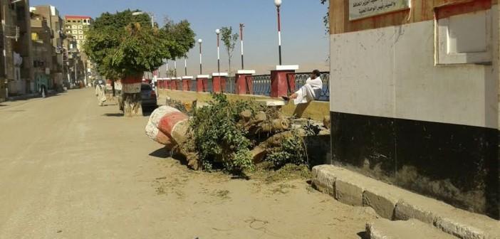 مجلس «المراغة» يقطع أشجارًا عتيقة عَ الكورنيش.. وأهالي: مذبحة (صور)