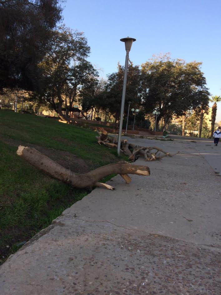 سكان مدينة نصر ينتقدون قطع أشجار الحديقة الدولية: مظهر غير جمالي (صور)