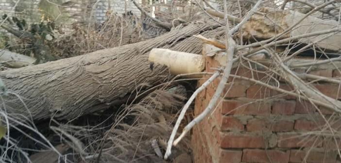 بالصور.. انهيار جزئي لبيت بالشرقية بعد سقوط شجرة كبيرة عليه