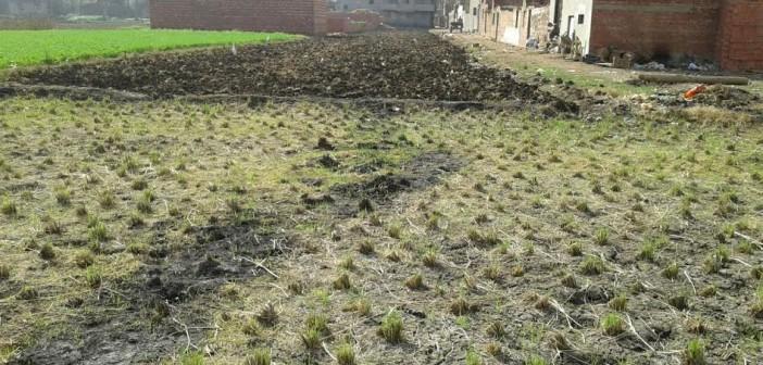 فيديو وصور .. تبوير الأراضي الزراعية بمحافظة الدقهلية وتحويلها إلى مباني