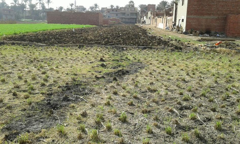 فيديو وصور .. توبير الأراضي الزراعية بمحافظة الدقهلية وتحويلها إلى مباني