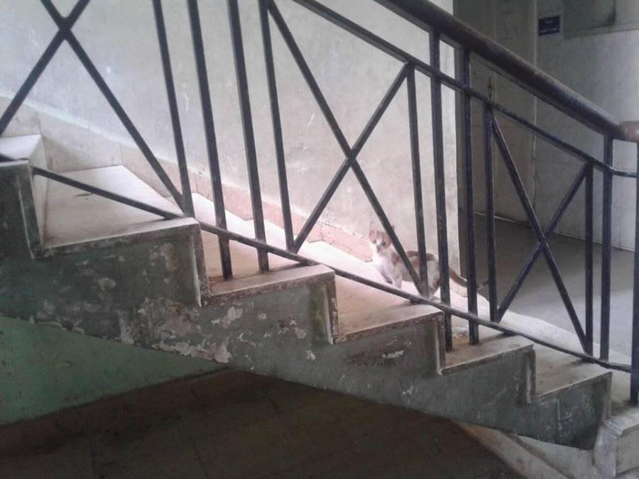 أهالي «أخميم» يشكون مستوى النظافة وتردي الخدمات بالمستشفى المركزي (صور)