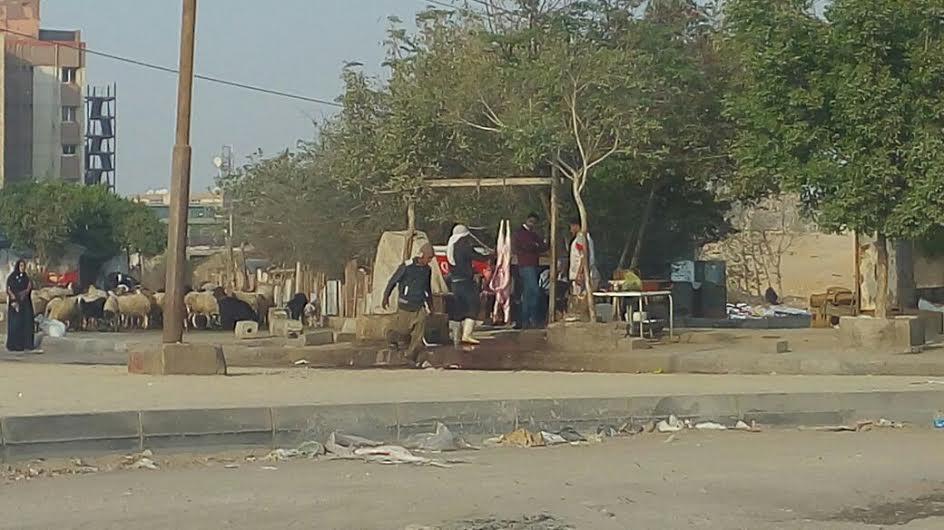 سكان حسن مأمون يشكون انتشار الزرائب وتربية الحيوانات داخل الكتلة السكنية (صور)