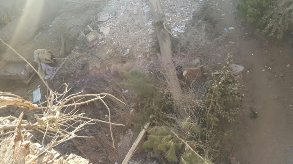 سقوط شجرة على أحد منازل قرية «كفر الأشراف»ومطالب للمحافظ بسرعة التحرك (صور)
