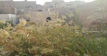 الأهمال يحاصر «بيت السحيمي» قمامة وحجارة وحشائش في غياب وزارة الآثار (صور)