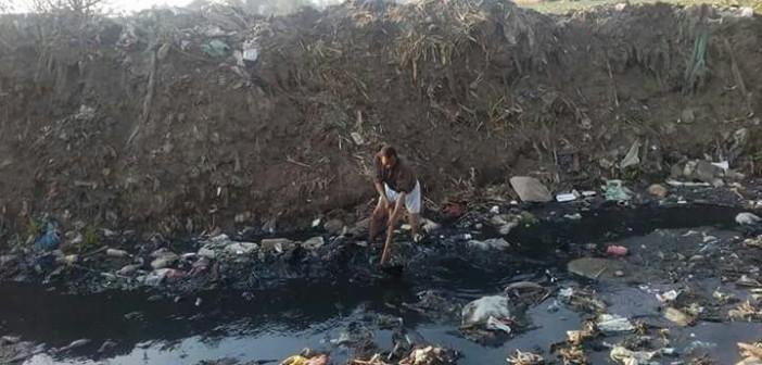 بالصور.. ري أراضي زراعية بمياه الصرف الصحي في سنديون بالقليوبية