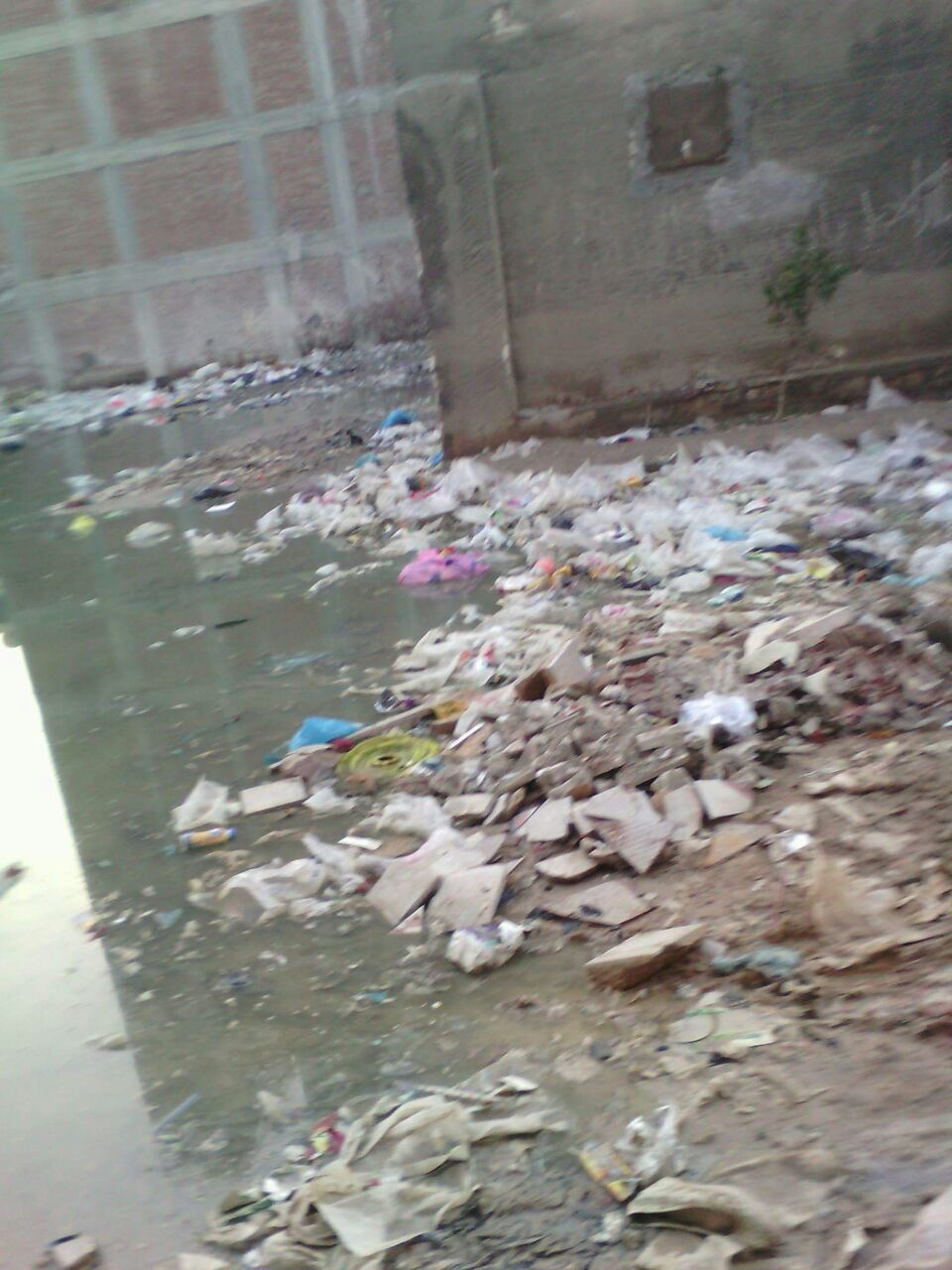 بالصور.. طفح الصرف يغرق شارع في «أول العامرية» غربي الإسكندرية