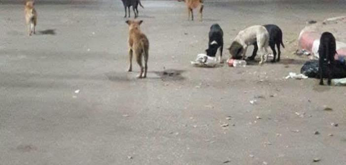 سكان في حدائق حلوان يشكون تهديد الكلاب الضالة للمارة