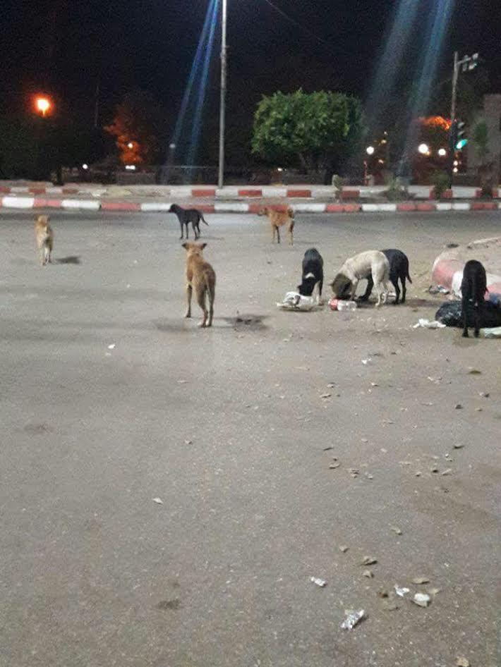 سكان بمحافظة أسوان يشكون انتشار الكلاب الضالة على طريق الكورنيش(صور)