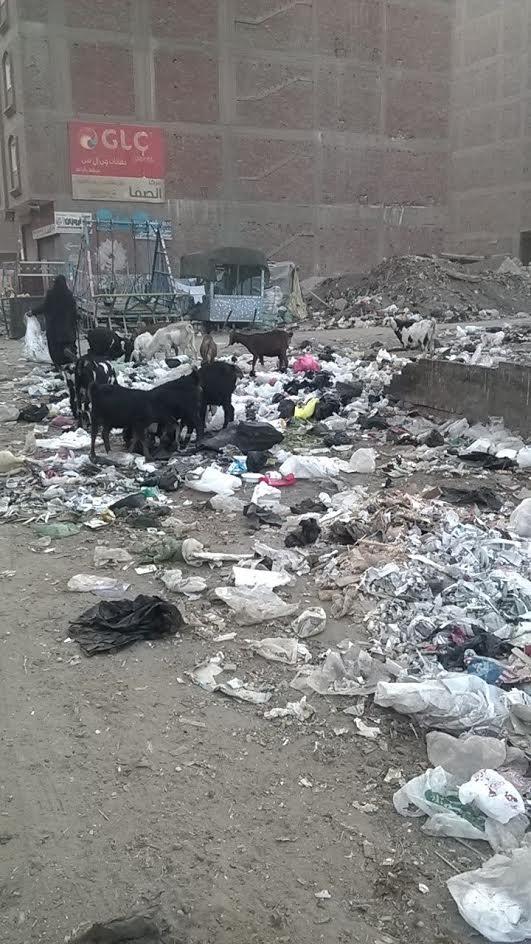 سكان «أرض اللواء» يشكون انتشار القمامة في الشوارع: «ياريت المحافظ ييجي يتفرج» (صور)