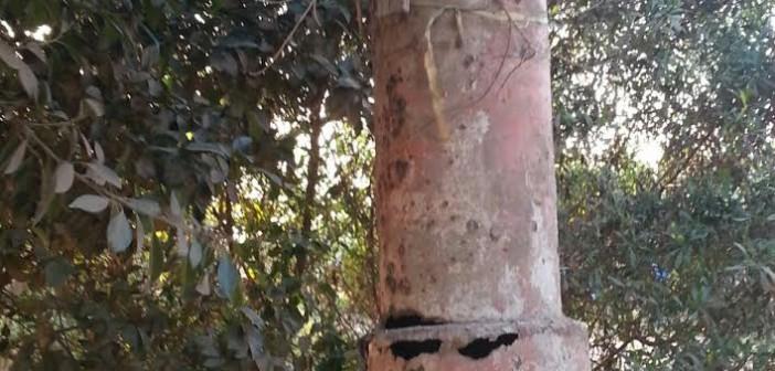 أهالي عزبة «عثمان نتما» بالبحيرة يطالبون بتغيير أعمدة الكهرباء (صور وفيديو)