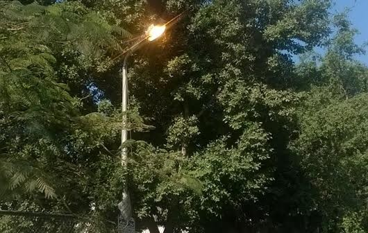 ⚠️ إضاءة أعمدة إنارة في حدائق الزيتون خلال وقت النهار (صورة)