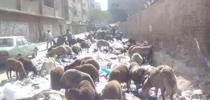 سكان بالهرم يطالبون برفع تجمعات القمامة من الشوارع (صور)
