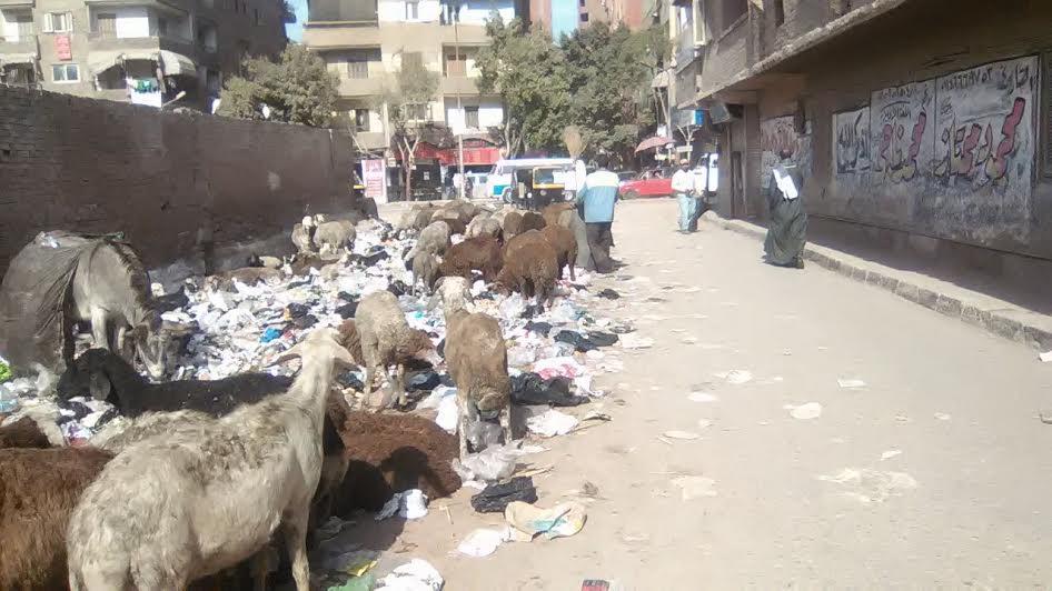 سكان الهرم يشكون انتشار القمامة بشوارع المنطقة (صور)