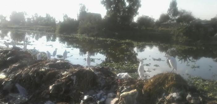 أهالي «طنيخ» يطالبون بتنظيف ترعة القرية: تصيب المواطنين بالأمراض (صور)