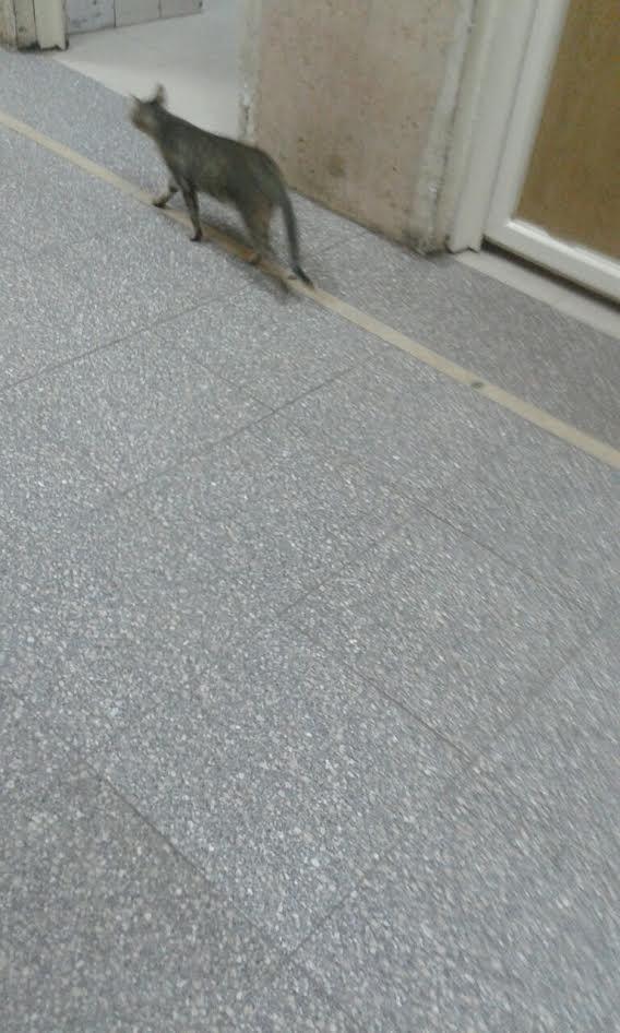 قطط وباعة جائلين داخل المستشفى الميري بالإسكندرية (صور وفيديو)