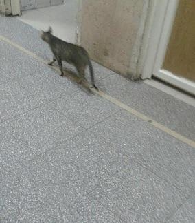 قطط وباعة جائلين داخل المستشفى الميري بالإسكندرية (فيديو)
