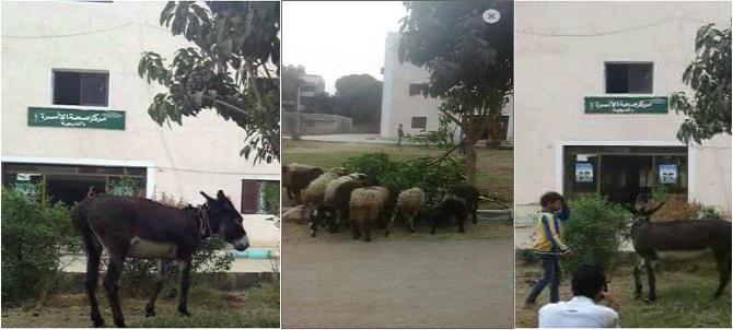 بعدما تجاهله المحافظ.. رعي أغنام وماشية في مركز صحة بالأقصر