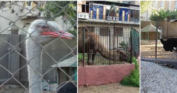 حديقة حيوانات طنطا «المنسية».. بطء وتيرة الترميم دون نقل الحيوانات إلى مكان آمن