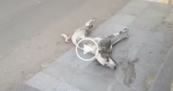إعدام كلاب جامعة القاهرة بالسم يثير غضب نشطاء رعاية الحيوان: «بأي حق يقتلون روح»