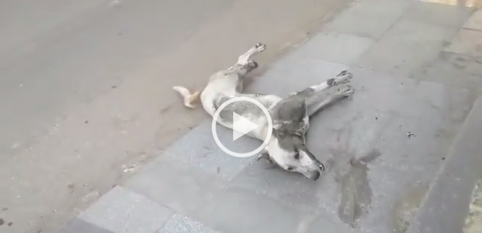 ▶️ بالفيديو.. إعدام كلاب جامعة القاهرة بالسم يثير غضب نشطاء رعاية الحيوان: «دي روح»