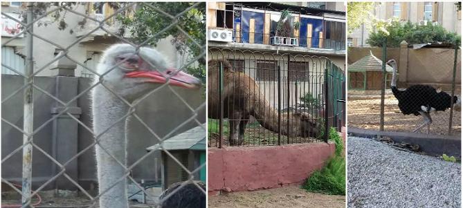 حديقة حيوانات طنطا.. بطء وتيرة الترميم دون نقل الحيوانات لمكان آمن (صور)