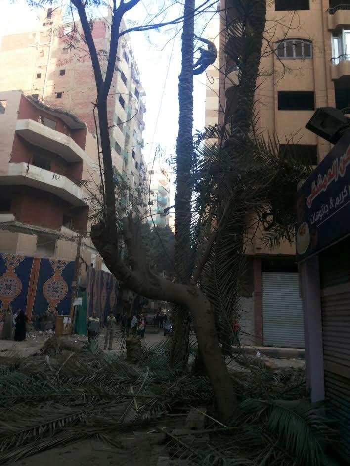 قطع أشجار عتيقة في «الهرم».. والأهالي يطالبون الحي بالتدخل (صور)