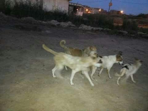 أهالي «العامرية» يشكون انتشار الكلاب الضالة بالمنطقة (صور)