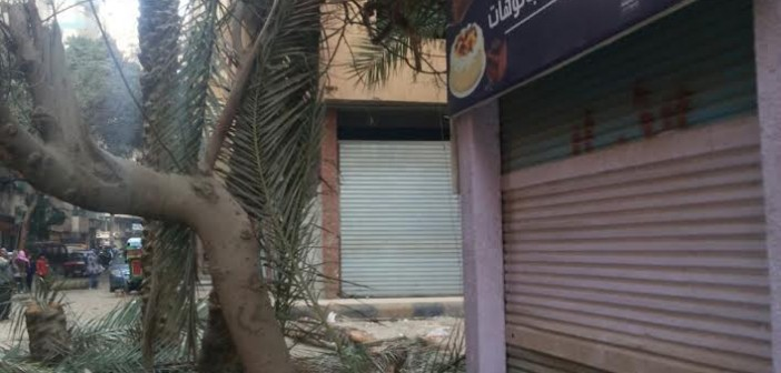 قطع أشجار عتيقة في الهرم.. ومطالب بتدخل الحي (صور)