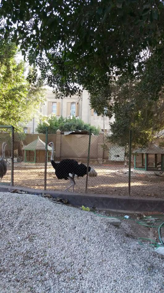 زوار «حديقة الحيوان» بطنطا يطالبون بسرعة إنهاء الترميم ونقل الحيوانات (صور)