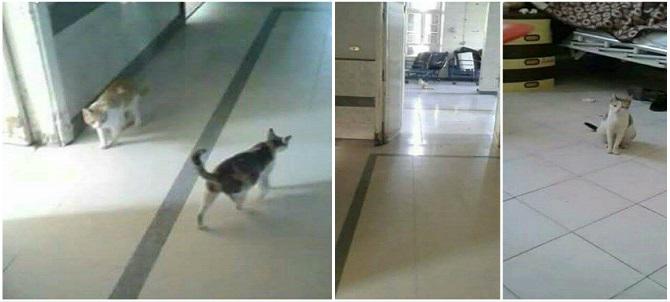 قطط تتجول بين المرضى في مستشفى جمال عبدالناصر بالإسكندرية (صور)