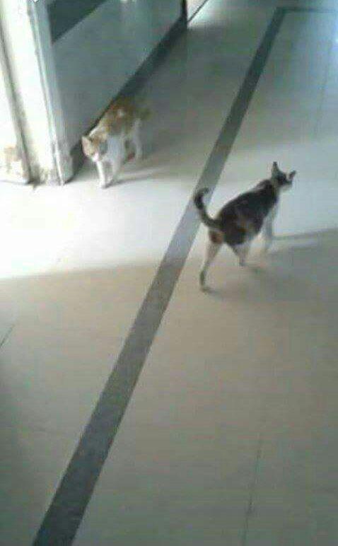 قطط تتجول بين أسرة المرضى في مستشفى جمال عبدالناصر (صور)