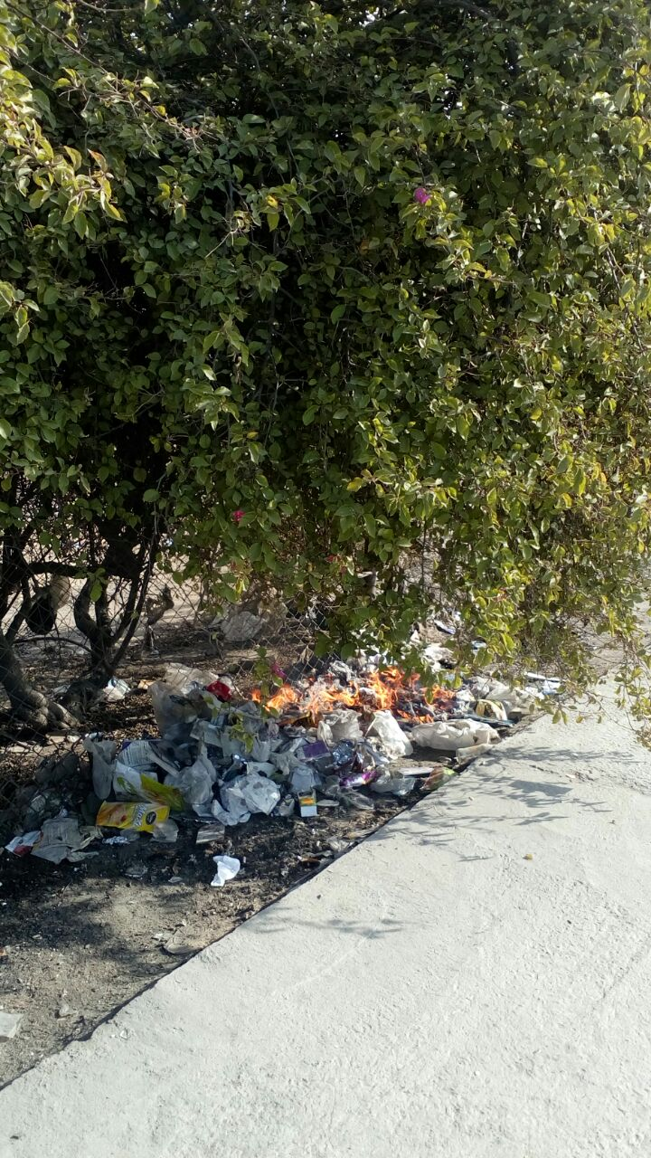 حرق تجمعات للقمامة في أشجار بموقف العاشر – السلام