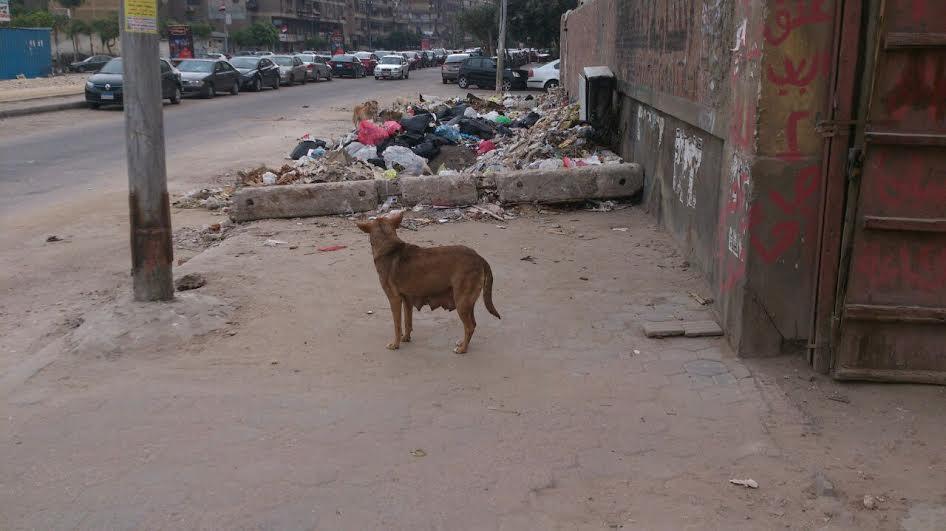 سكان بـ«منشية البكري» يشكون انتشار القمامة في الشوارع (صور)