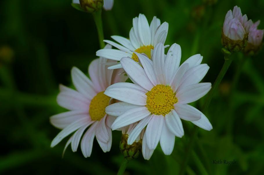 بعدسة مواطن.. جولة في معرض الزهور بالأورمان(صور)