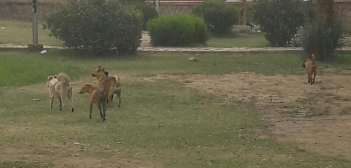 مطالب بالحد من انتشار الكلاب الضالة في أسوان (صور)