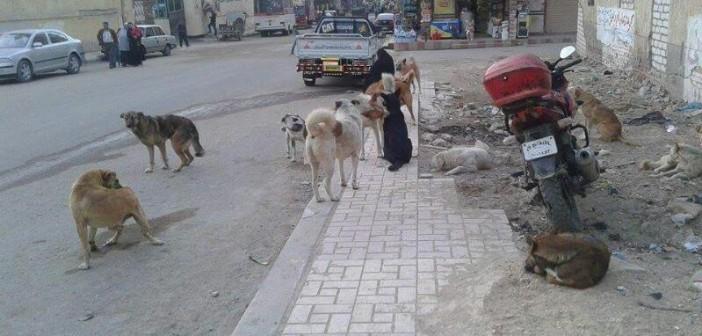 مخاوف من تهديد الكلاب الضالة حياة أهالي العامرية (صور)