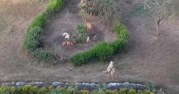 الكلاب الضالة في مصر الجديدة