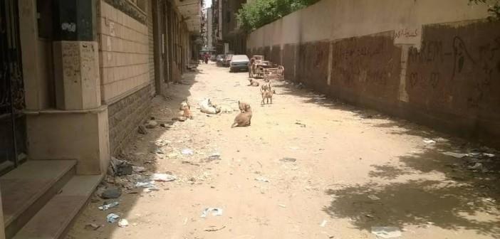 مخاوف من انتشار الكلاب الضالة في شوارع أرض اللواء (صور)