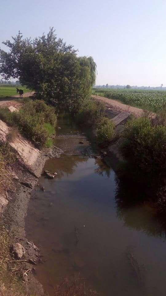 مزارعو «الرجدية وحصة شبشير» بالغربية يحذرون من نقص مياه الري