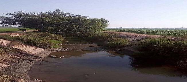 مزارعو «الرجدية وحصة شبشير» بالغربية يحذرون من نقص مياه الري (صور)